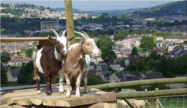 bath city farm 2