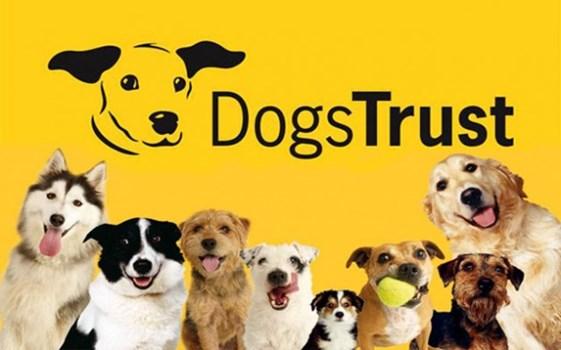 Image result for dog trust